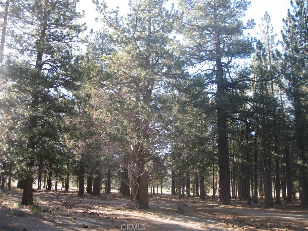 2818 Erwin Ranch Road, Big Bear, CA, 92314 Photo 1