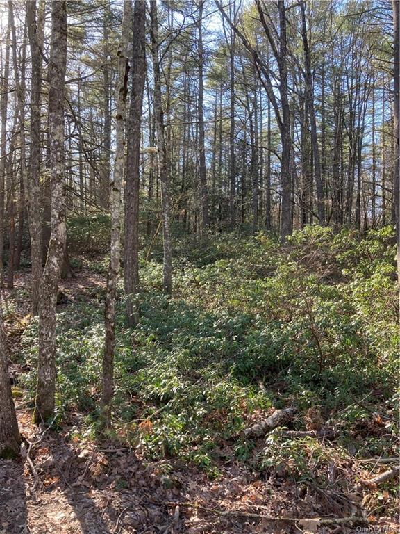 Forest Pond Road, Narrowsburg NY 12764