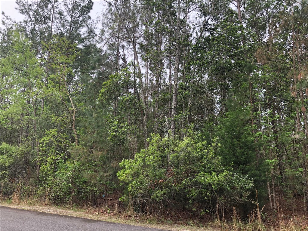 Lot 96 Clark's Crossing Street, Woodbine GA 31569